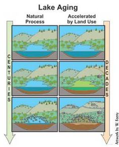 """Depending on the source you look at, """"eutrophication"""" refers to the process by which a body of water acquires a high concentration of nutrients, especially phosphates and nitrates (Art,…"""
