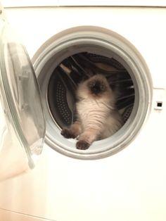 The washing cat