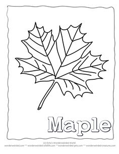 Leaf Coloring Page ivy, Our Coloring Pages of Ivy Leaves