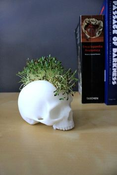 Skull Desktop Planter KIT MOHAWK Greenery Potplant Microherbs Plant Terrarium 3D printed Green Thumb on Etsy, $46.13