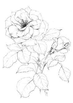 Flower Art Drawing, Flower Line Drawings, Flower Sketches, Floral Drawing, Drawing Sketches, Art Drawings, Rose Drawings, Sketchbook Drawings, Art Floral