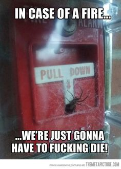 in case of a fire... we're just gonna have to fucking die! - Spiders