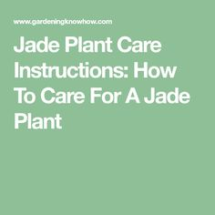 Jade Plant Care Instructions: How To Care For A Jade Plant
