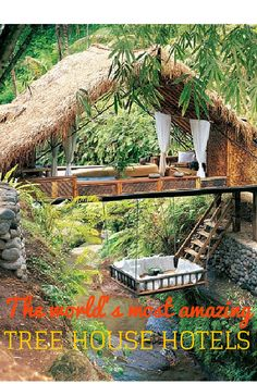 The world's most AMAZING tree house hotels!