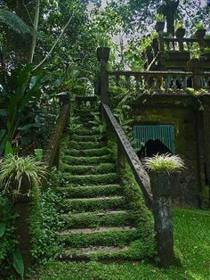 stairs blanketed in moss-it has been sometime since these steps have been used..