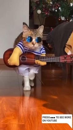 Baby Animals Super Cute, Cute Baby Cats, Cute Little Animals, Cute Cats And Kittens, Kittens Cutest, Funny Kittens, Silly Cats, Funny Cute Cats, Cute Cat Gif