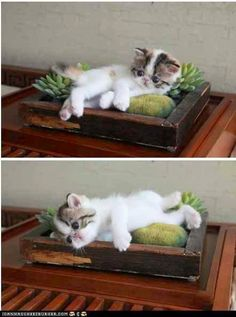 Cats and cactus