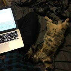She's so lazy Tags: #lazy #cats #animals #funny #cute