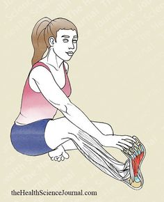 Starting Stretching – 53 Full Body Stretches for Beginners (Part - The Health Science Journal Scoliosis Exercises, Body Stretches, Stretching Exercises, Body Exercises, Fitness Tips, Health Fitness, Body Fitness, Full Body Stretch, Fit Bodies