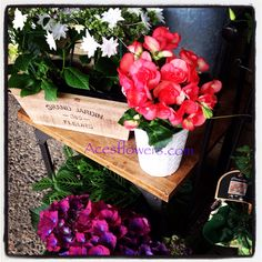 Hydrangeas and begonias