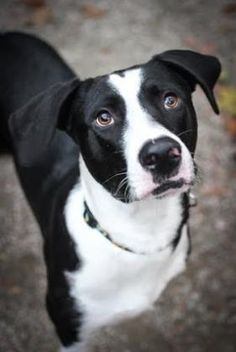6 / 3 Petango.com – Meet Sonic, a 1 year 6 months Retriever / Mix available for adoption in Hopkinton, MA Address 5 Rafferty, Hopkinton, MA, 01748 Phone (508) 435-6938 Website http://www.baypathhumane.org Email shelter@baypathhumane.org