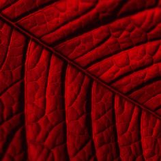 Explore amazing art and photography and share your own visual inspiration! Colors Of Fire, Red Leaves, Fiery Red, Red Aesthetic, Shades Of Red, Ruby Red, Textures Patterns, Dark Red, Red And Pink