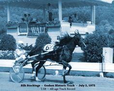 Silk Stockings lived to 31 yo Race Horses, Horse Racing, Standardbred Horse, Harness Racing, Silk Stockings, History, Heart, Animals, Trotter