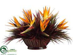 Bird of Paradise, Grass - Orange Burgundy - Pack of 1