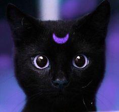 Purple Aesthetic : Photo