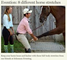 stretches for horses and humans