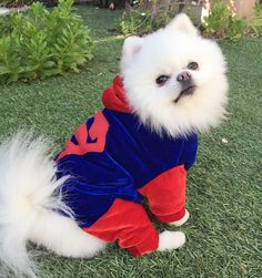 Superman Costume Handmade Blue Red Velvet Fancy Pet Dog Puppy Hood Stretchy M | eBay