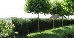 Langeder Gartenharmonie: Sichtschutz im Garten