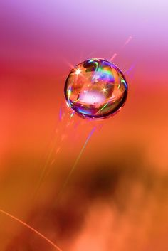 Water drop.  Finding beauty in simple things.