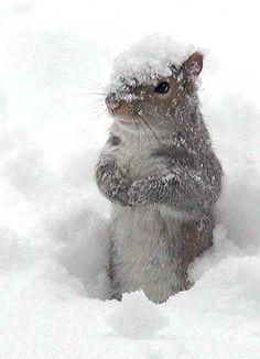 Oh, hey there little snow squirrel