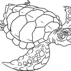 Free Coloring Pages Of Turtles. Sea Turtle  Verry Old Evolution Coloring Page PagesFree Pages For Kids With Free Printable