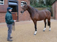 Frankel (2009 bay TB stallion) 14-14-0-0. Galileo {Sadlers Wells x Urban Sea by Miswaki} x Kind {Danehill x Rainbow Lake by Rainbow Quest} Owned & Bred by Prince Khalid Abdulla. Highest-rated racehorse in the world from 5/2011. After his win in the Queen Elizabeth II Stakes at Ascot, 10/2011, Frankel was given a rating of 143 by Timeform, fourth highest of all time behind Sea Bird, Brigadier Gerard & Tudor Minstrel. He finished his racing career on a rating of 147.