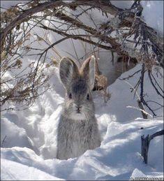 Keep warm little bunny!