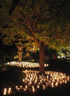 Trees create a warm glow from the many twinkling candles nestled around them.