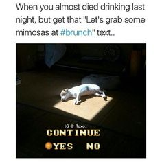 ok Ill do brunch but I need an ambulance to get me there (rp @_taxo_  great memes follow @_taxo_ for more)