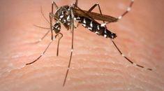 Zika y Dengue nuevos casos en León, Guanajuato - http://www.notimundo.com.mx/salud/zika-dengue-leon-guanajuato/