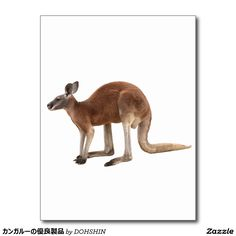 Superior product of kangaroo postcard