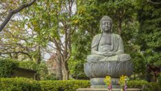 In his new book, Robert Wright wants to focus on Buddhism's diagnosis of the human condition, as opposed to the traditional aspects of Buddhism as a religion. Buddhist Meditation, Meditation Music, Science Display, August Renoir, Beautiful Ruins, Beautiful Lion, University Of Rochester, Dark Wings, Gautama Buddha