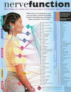 Nerve Function Chart : ' Many things can impair your nervous system and interfere with its function. When there is no interference, your nervous system controls the healthy function of virtually every cell, tissue, organ, and system of your body. Fitness Hacks, Fitness Workouts, Chronic Fatigue, Chronic Pain, Chronic Illness, Chiropractic Care, Chiropractic Center, Chiropractic Benefits, Chiropractic Adjustment
