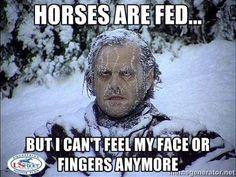 Looks familiar! #winter #horses #humor #funny #brr