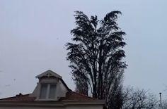 Vi sembra un normale albero? Sbagliato! Guardate il video incredibile: http://www.videopazzeschi.com/vi-normale-albero-sbagliato-video/