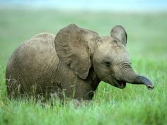 """Bahati's Birthday"" A baby elephant faces poachers on his first day of life."