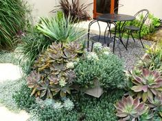Succulents are also great because you can allow them to grow wild. Most varieties won't require much pruning or upkeep. These plants rarely look unkept — even when spilling out of planters or onto sidewalks, they look cultivated and purposeful.