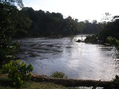 #Suriname #Jaw Jaw #Isadou
