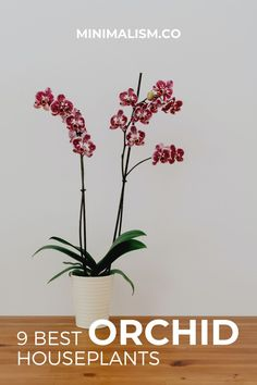 Of the 9 best houseplants, the Orchid is perhaps one of the most iconic and could even be considered an essential piece of decor for any minimalist home. The Orchid, along with many other flowering plants is common in Japanese minimalism and can help bring your space to the next level.