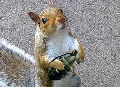 when squirrels attack - scary squirrel world