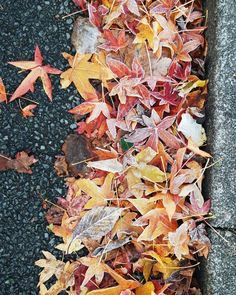 "Eveline on Instagram: ""Another frosty morning over here - snapped these photos of the gorgeous autumn leafs on the side of the road. All their stunning colours…"" Leaves, Colours, Autumn, Texture, Photos, Crafts, Instagram, Surface Finish, Pictures"