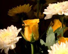 Roses, chrysanthemums