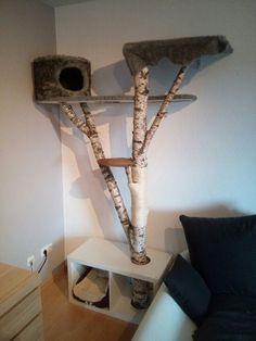 Kratzbaum Aus Einer Birke. #catsdiydecoration