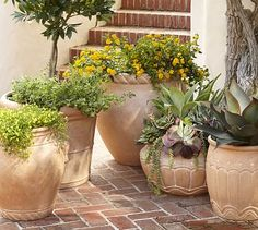 Umbria Planters, $99-$179, Pottery Barn. Frost-resistant terra cotta! Perfect for our climate, which will break terra cotta in the winter.