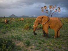Kenya Safari - Best Family Trips