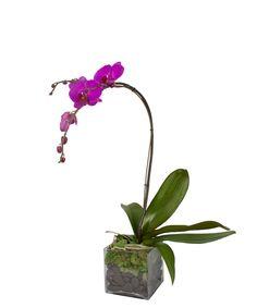 Purple Phalaenopsis and Moss Garden