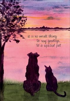 Professional Pet Sympathy Cards for Veterinarians Pet Loss Quotes, Dog Quotes, Phteven Dog, Pet Sympathy Cards, Pet Sympathy Quotes, Sympathy Verses, Pet Poems, Animals And Pets, Cute Animals