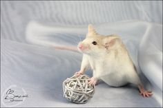 DFM Billy II - Show Mouse by BanzZaii.deviantart.com on @deviantART
