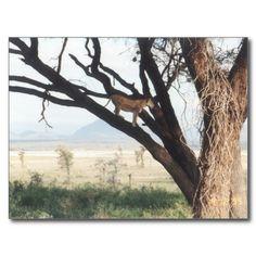 Postkarte Lwin auf dem Baum