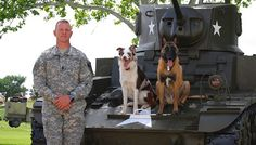 Interview: Training Dogs with Electronic Collars Electronic Dog Collars, Interview Training, Fancy Dog Collars, Shock Collar, Military Dogs, Collar Top, Training Dogs, Cool Photos, Puppies